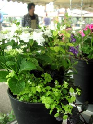 花と観葉植物とふれあいライブの関係?!_c0141652_12545599.jpg