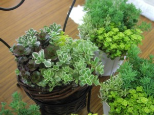 花と観葉植物とふれあいライブの関係?!_c0141652_132434.jpg