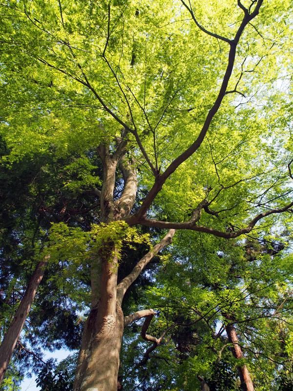 新緑_a0100959_2212613.jpg