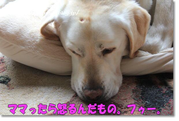 b0136683_9173698.jpg