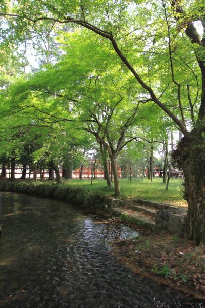 上賀茂神社_e0051888_3221367.jpg