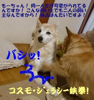 a0154801_9375261.jpg