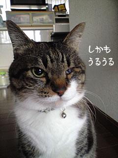 c0035001_1711175.jpg