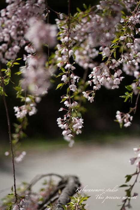 春の花々_c0137403_17581935.jpg