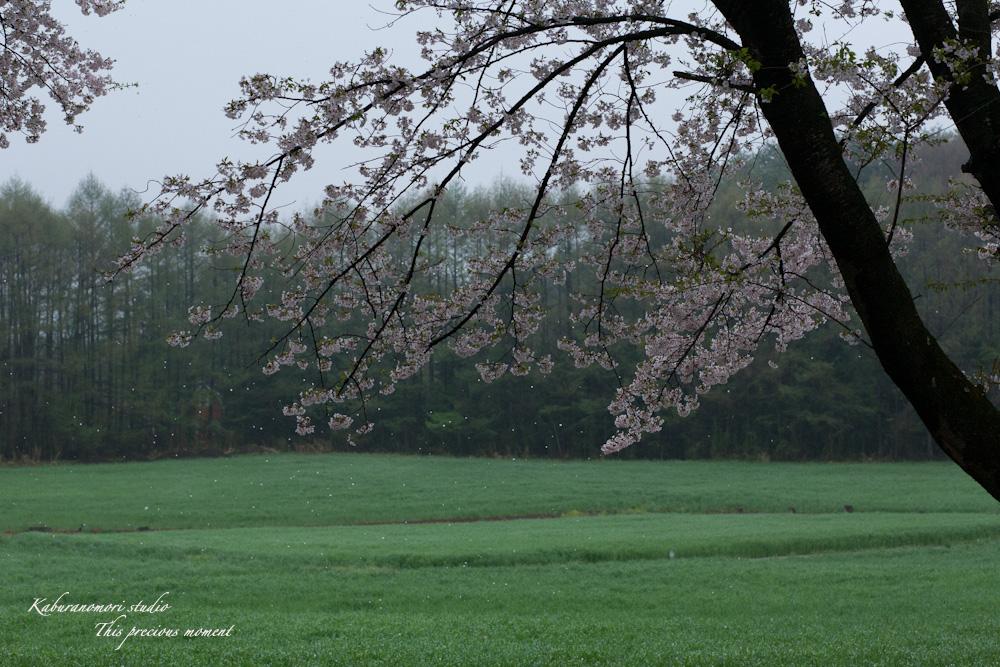 春の花々_c0137403_1759139.jpg