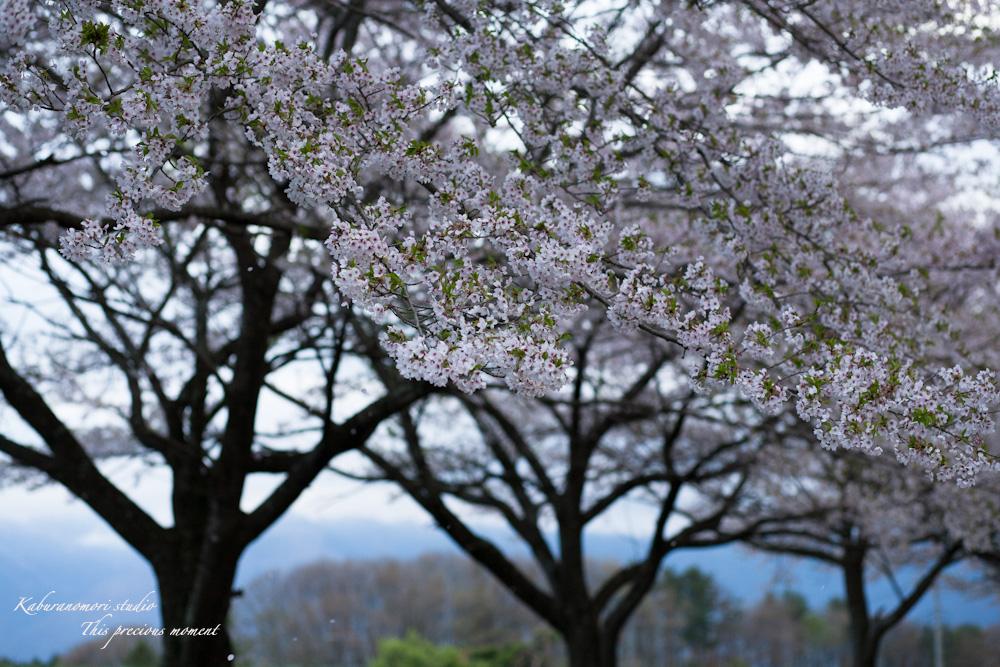 春の花々_c0137403_17592170.jpg