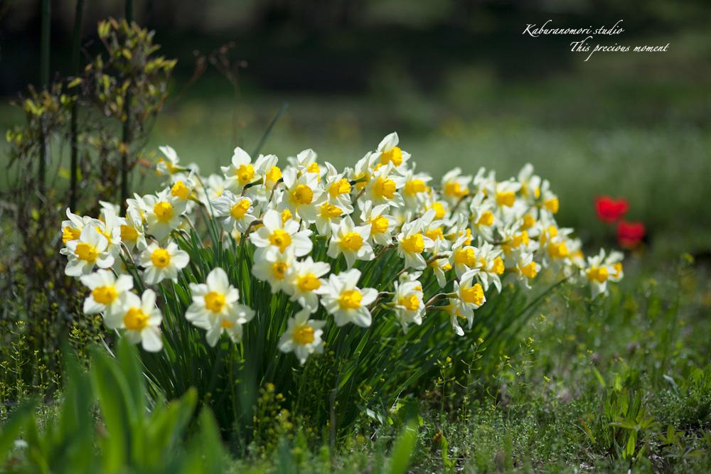 春の花々_c0137403_17594489.jpg