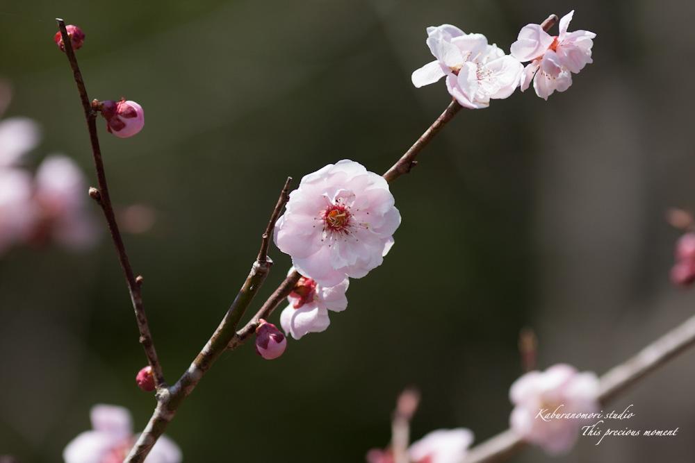春の花々_c0137403_17595660.jpg