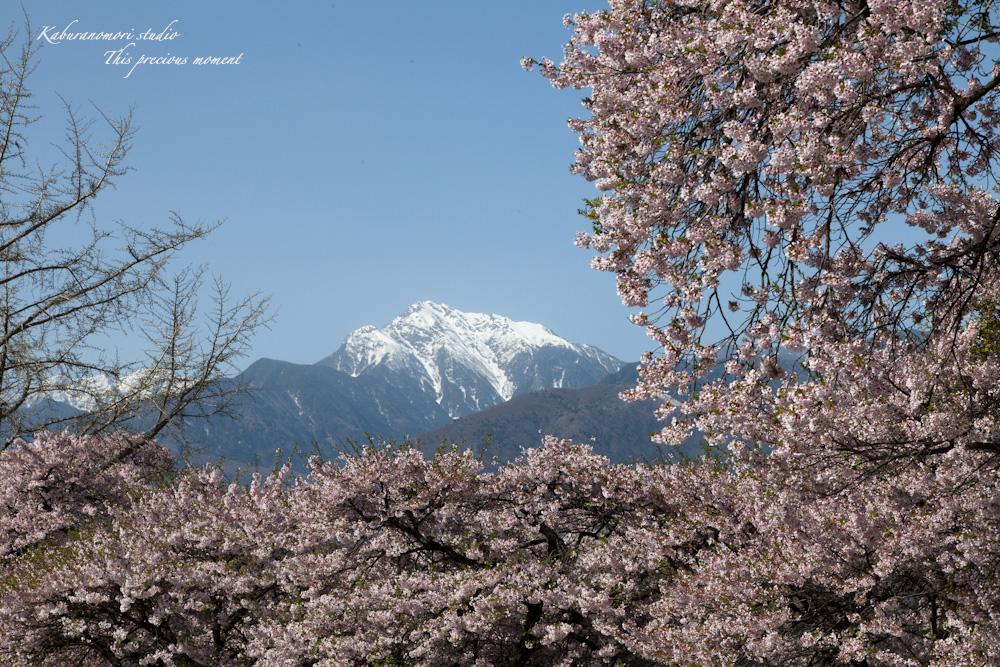 春の花々_c0137403_180327.jpg
