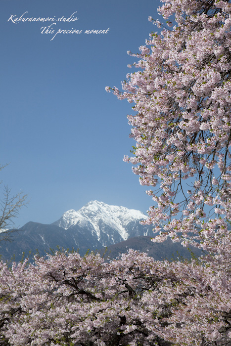 春の花々_c0137403_1804644.jpg