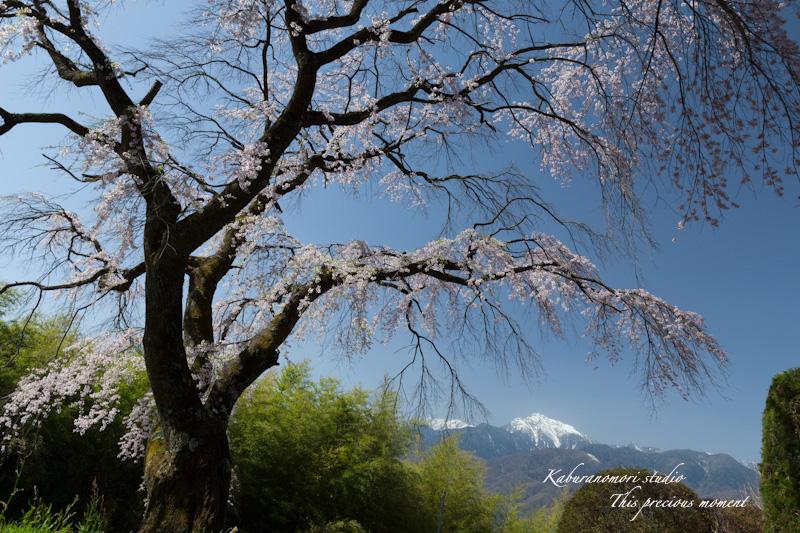 春の花々_c0137403_1805452.jpg
