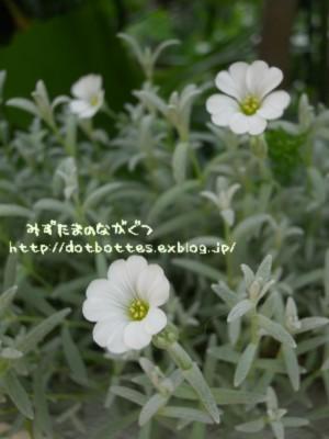 d0170109_22183626.jpg