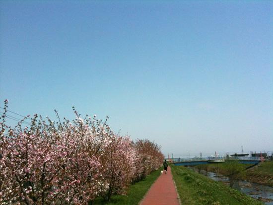 桜RUN_f0032814_22141631.jpg