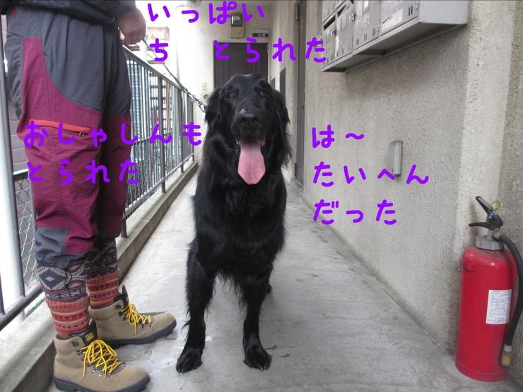 c0237824_1102152.jpg