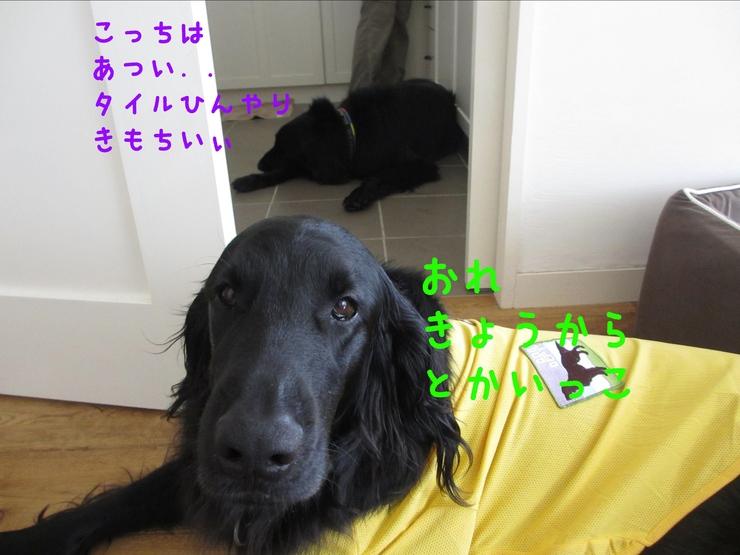 c0237824_1113541.jpg