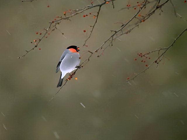 愛鳥週間(バードウィーク)、蔵織で2008年に野鳥写真展をやった兄の写真です。_d0178448_22414861.jpg