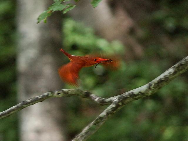 愛鳥週間(バードウィーク)、蔵織で2008年に野鳥写真展をやった兄の写真です。_d0178448_22421625.jpg