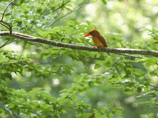 愛鳥週間(バードウィーク)、蔵織で2008年に野鳥写真展をやった兄の写真です。_d0178448_2242343.jpg