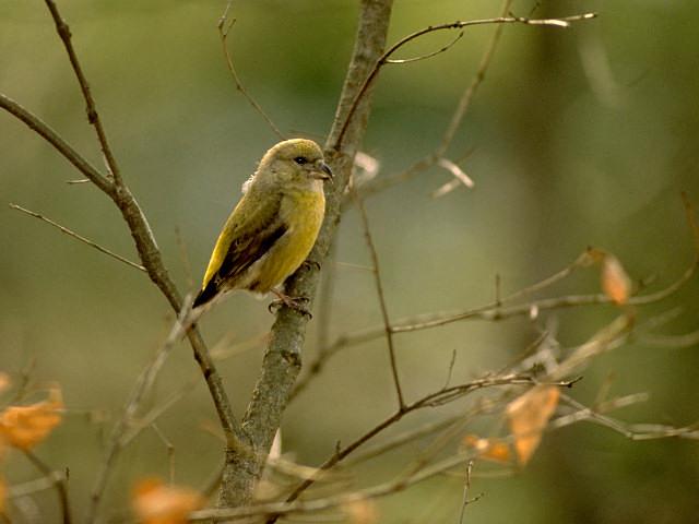 愛鳥週間(バードウィーク)、蔵織で2008年に野鳥写真展をやった兄の写真です。_d0178448_22425789.jpg