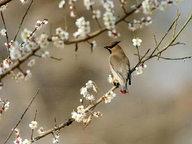 愛鳥週間(バードウィーク)、蔵織で2008年に野鳥写真展をやった兄の写真です。_d0178448_22431393.jpg