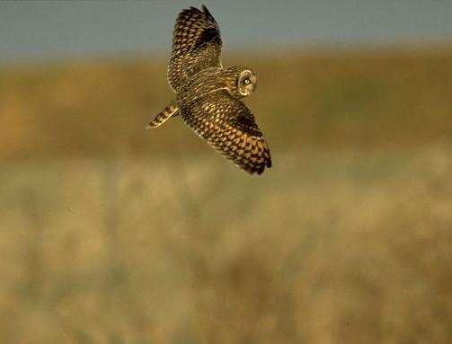愛鳥週間(バードウィーク)、蔵織で2008年に野鳥写真展をやった兄の写真です。_d0178448_22455238.jpg