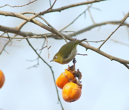 愛鳥週間(バードウィーク)、蔵織で2008年に野鳥写真展をやった兄の写真です。_d0178448_22463020.jpg