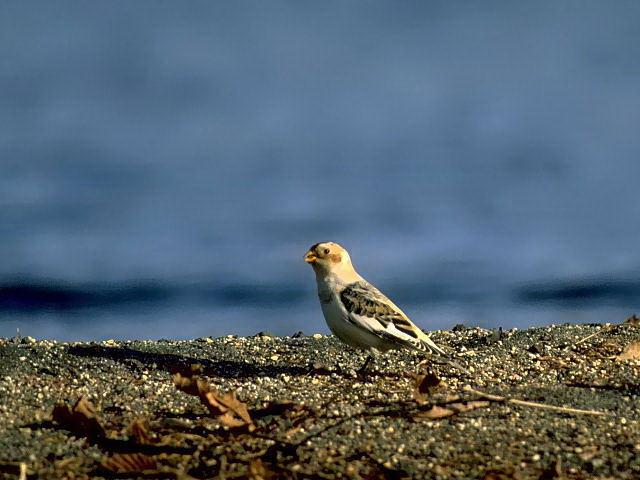愛鳥週間(バードウィーク)、蔵織で2008年に野鳥写真展をやった兄の写真です。_d0178448_22481553.jpg