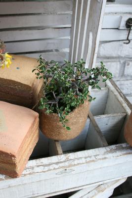 かえる庭園研究所の仲間たち♫_e0149863_1125296.jpg