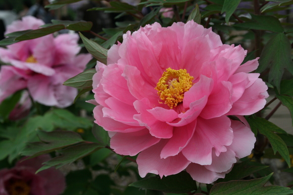 藤の花と花畑_c0248269_10131030.jpg