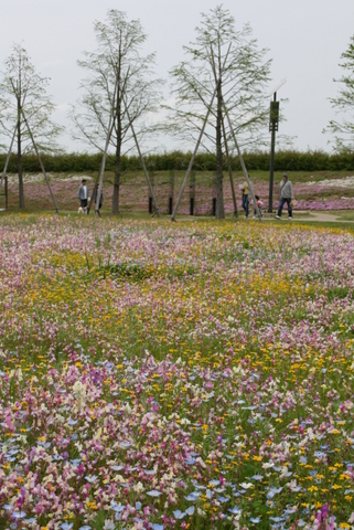 藤の花と花畑_c0248269_10165325.jpg