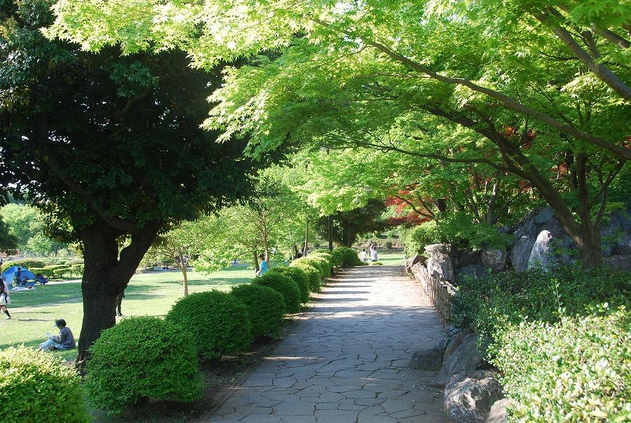 初夏の風景_c0187781_9143817.jpg