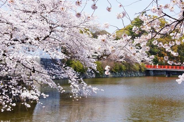 小田原城址公園の桜_b0145398_16114818.jpg