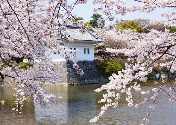 小田原城址公園の桜_b0145398_1612094.jpg