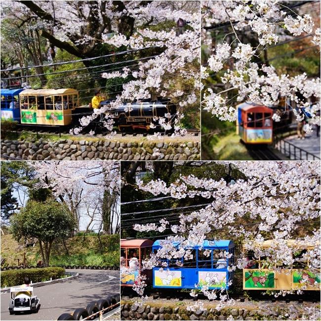 小田原城址公園の桜_b0145398_16424316.jpg
