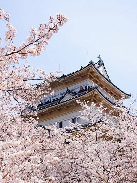 小田原城址公園の桜_b0145398_16513031.jpg