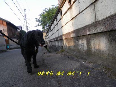 c0097309_10293582.jpg