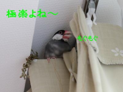 b0158061_023486.jpg