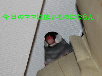 b0158061_2105437.jpg