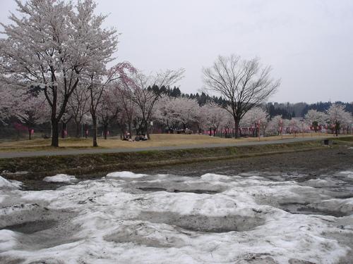 雪と桜_e0266363_22292216.jpg