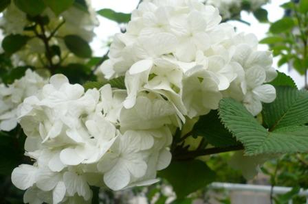 我が家は花盛り。_a0220570_23264035.jpg
