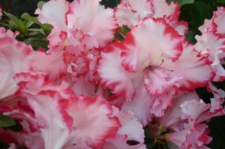 我が家は花盛り。_a0220570_23271781.jpg