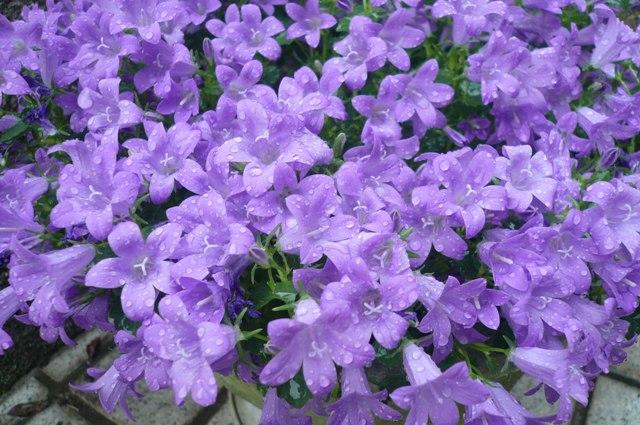 我が家は花盛り。_a0220570_2333924.jpg