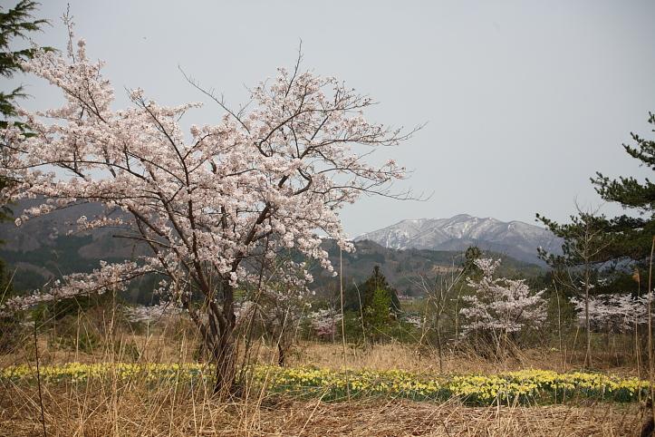 福島 桜巡り 喜多方市・山都 名も知れぬ桜_e0165983_1593232.jpg