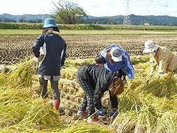 稲刈り体験(緑が丘小・北郷小)_d0247484_22124873.jpg