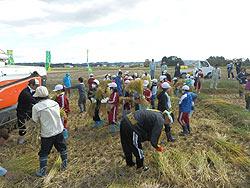 稲刈り体験(緑が丘小・北郷小)_d0247484_22153299.jpg