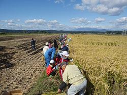 稲刈り体験(緑が丘小・北郷小)_d0247484_2284236.jpg
