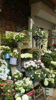 お花屋さん。_d0178587_12502290.jpg