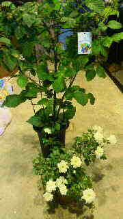 お花屋さん。_d0178587_13204238.jpg