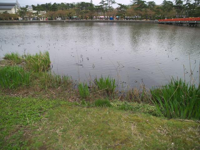 故郷の風景 高田公園のお堀_f0024992_8521495.jpg
