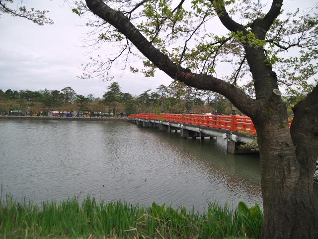 故郷の風景 高田公園のお堀_f0024992_8523059.jpg